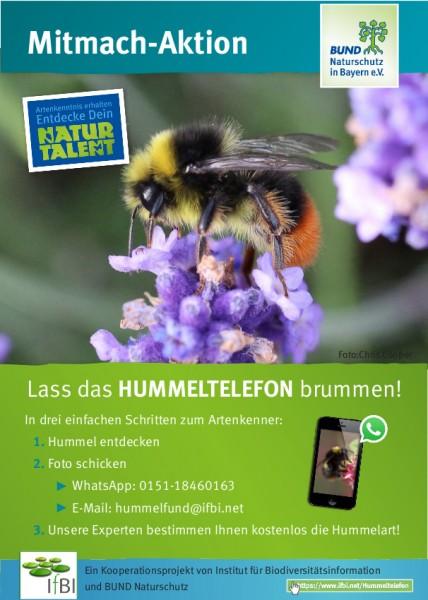 """Faltblatt """"Hummeltelefon"""""""