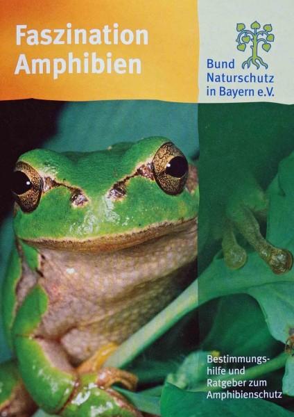 "Broschüre ""Faszination Amphibien"""