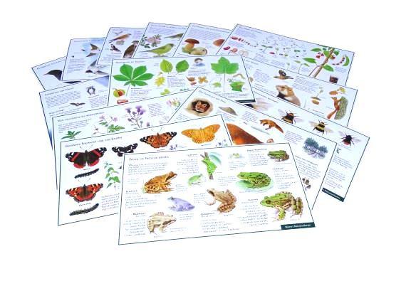 Lernpostkarten