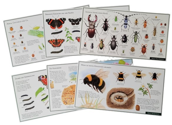 "Lernpostkarten-Set ""Insekten"""
