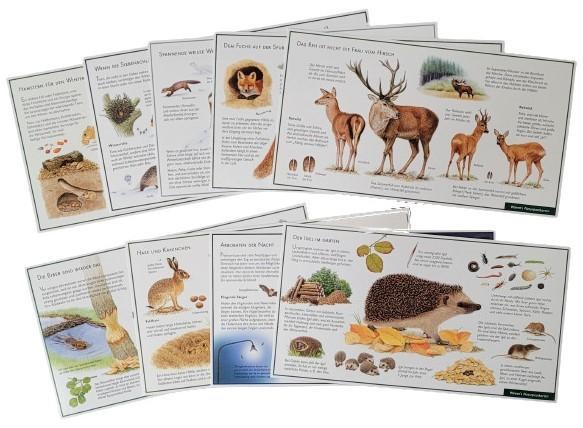 """Lernpostkarten-Set """"Säugetiere"""""""