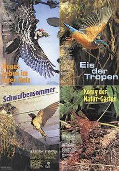 "Plakatserie ""Vögel"" (4 x DIN A3)"