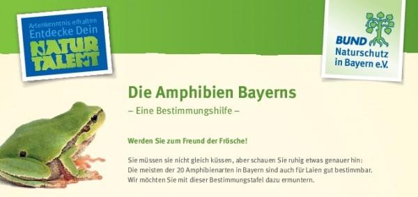 """Faltblatt """"Die Amphibien Bayerns - eine"""