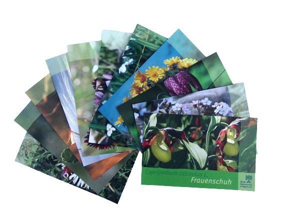 """Postkartenset """"Pflanzen"""" (12-teilig)"""