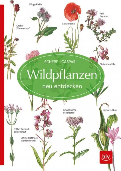 """Buch """"Wildpflanzen neu entdecken"""""""