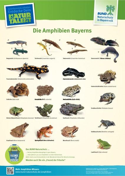 """Plakat """"Die Amphibien Bayerns"""""""