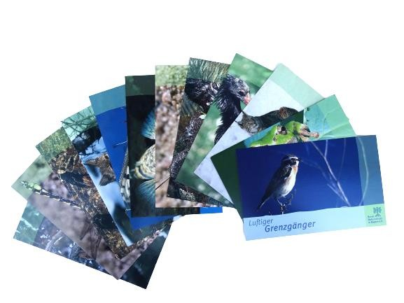 "Postkartenset ""Tiere"" (12-teilig)"