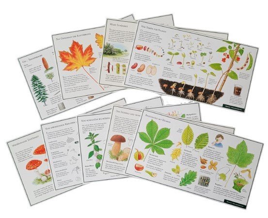 "Lernpostkarten-Set ""Pflanzen und Pilze"""