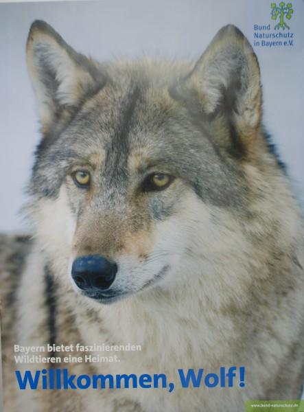 "Plakat ""Willkommen Wolf"""