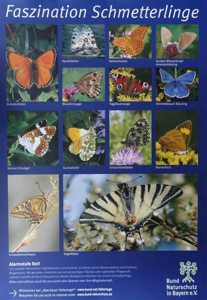 """Plakat """"Faszination Schmetterlinge"""""""